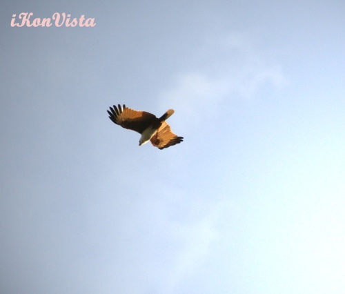 Eagle spotting